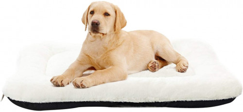 #3. ANWA PP Cotton Pet Pillow